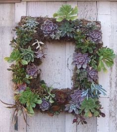 Ssucculent wreath
