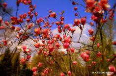 I wiosna