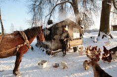 Camel, Horses, Christmas, Animals, Types Of Animals, Russia, Travel Report, Travel Advice, Xmas