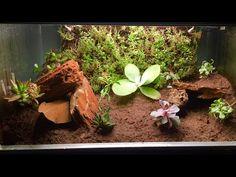 Bioactive Leopard gecko Setup (Biopod How To) Leopard Gecko Setup, Leopard Gecko Habitat, Leopard Gecko Terrarium, Lizard Terrarium, Gecko Cage, Lepord Gecko, Hermit Crab Habitat, Gecko Vivarium, Reptile Habitat