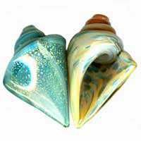 Large Lampwork Seashell Beads
