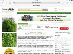 Dwarf Nandina Noninvasive Planting Zones 6 7 8 9 10