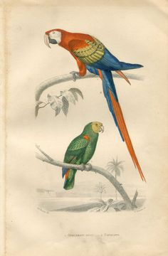 1885 Antique Birds Print Hand Colored Engraving by CarambasVintage