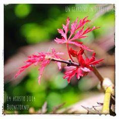 un giardino in diretta - blog di giardini, giardinaggio, natura e di artigianato: In diretta dal giardino: buongiorno! 326/365