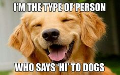 Hi dogs