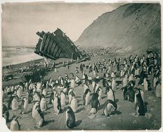 Antarctica penguins and ship wreck