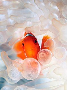 Natures Doorways - earthlynation: clownfish source