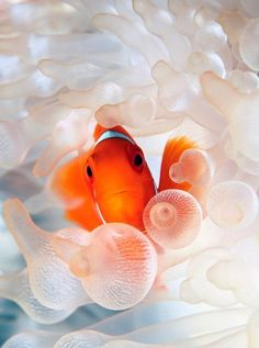 Natures Doorways - earthlynation: clownfish source