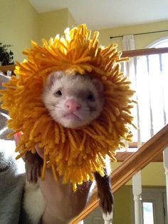 Ferret Lion Mane by MiniPetCrafts on Etsy, $10.00