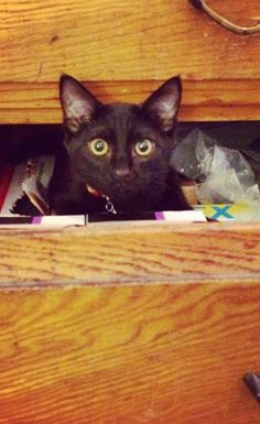 28 Reasons To Restore Your Faith In Black Cats