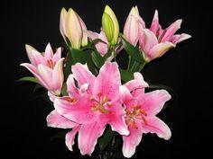 http://www.5280flowers.com/media/catalog/product/cache/1/image/5e06319eda06f020e43594a9c230972d/f/i/file_38_8.jpg