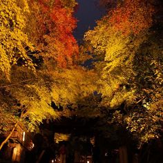 紅葉の門 The gate of #autumnleaves in #kyoto #japan #travelgram #travel