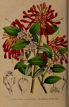 t.8 (1858) - Belgique horticole. - Biodiversity Heritage Library