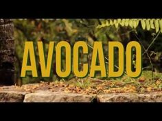 BRAND NEW track by Jah9 'AVOCADO' a little feel good vibes!