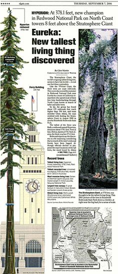Hyperion, the world´s tallest tree - feet, California