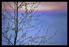 Blue Spring by eswendel on DeviantArt Finland