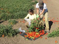 UC Davis - Sustainable Agriculture
