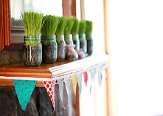 Spring fever remedy. Grow wheat grass in mason jars and let them sprout on your mantel.