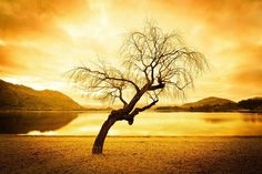 One of my favorite lakeside trees in Wanaka...  now headed for the airport for our trip to the USA.  See you in Vegas Dallas and Denver for the events! #treyratcliff More on my blog at http://ift.tt/qCe472