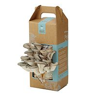 """Ready To Grow MUSHROOM KIT  $14.00 - $19.95  Talk about a box lunch! This DIY kit yields tasty results. Grow up to 1.5 lbs of pearl oyster mushrooms with just a spray of mist twice a day. Each kit can grow 2-4 crops. Harvest your first crop of delicious mushrooms in as little as 10 days. Made in Oakland, CA.  Item ID: 21055  Materials: 100% Recycled Coffee Grounds, oyster mushroom spawn  4.5"""" L x 3.5"""" W x 11"""" H; 3 lbs."""