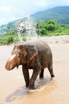 Elephant Nature Park, Chiang Mai, Thailand - a haven for elephants rescued from abusive situations. If you are interested in ethical travel, you may wish to research the elephant situation in Thailand before deciding to ride one.