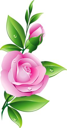 Illustration about Beautiful pink rose. Illustration of ecology, card, abstract - 12948282 Easy Flower Drawings, Flower Art Drawing, Beautiful Flower Drawings, Beautiful Rose Flowers, Beautiful Beautiful, Wallpaper Nature Flowers, Rose Flower Wallpaper, Butterfly Wallpaper, Beautiful Girl Wallpaper