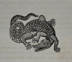 balnibarbi: Crocodile - Bewick's Fables 1820 small vignette by. Antique Illustration, Illustration Art, Crocodile Tattoo, Traditional Tattoo Art, Traditional Flash, Esoteric Art, Flash Art, Medieval Art, Manga Comics
