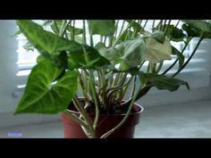 10 szobanövény, amely még a sötét sarokban is jól elvan | Hobbikert.hu