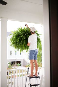 how to get big healthy ferns - Holy City Chic Hanging Ferns, Hanging Plants Outdoor, Plants For Hanging Baskets, Hanging Planters, Indoor Plants, Hanging Flowers, Fern Planters, Potted Ferns, Porch Plants