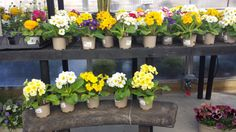 Potted plants in the Garden Center