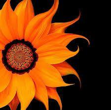 Image result for orange flowers