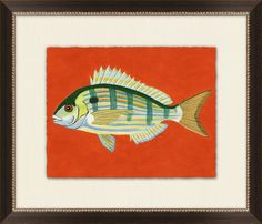 pinfish, spotfish, pigfish, etc. series of 3 with orange/green/blue backgrounds