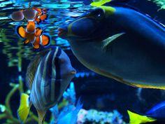 Darryl Vanacker's 200 US-gallon SPS Dominated Reef Aquarium