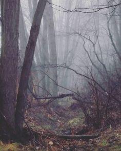 #lovenature #naturephotography #nature #pennsylvania #lifeinthevalley #river by cheriematassa