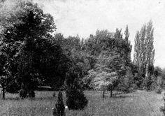 NYME Botanikus Kert: Régi képek a Botanikus Kertről  Részlet a kert északi részéből (1948)