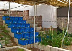 Aquaponics + Fish Farming = Sustainability ...