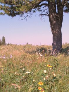 Wildflowers abound in Cypress Hills, Sk. Another photo copyright N.Jacquin 2012  www.nikkisportraits.com