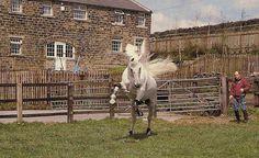 Milton having some fun in the paddock with John Whitaker. July 1997