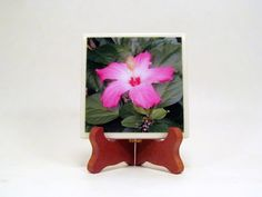 Hibiscus Pink and White Handmade Photo Coaster, FI152 by PhotographyByRoger on Etsy