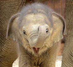 What a cute elephant!