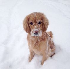 Covering myself in snow at the park! - Beresford Park - Toronto, ON - Angus Off-Leash