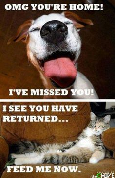 Accurate description of cats and dogs. Still like both though.