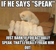 Hahaha.... lol