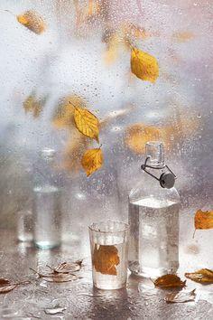 Still Life Photography Отведай до дна эту осень да выпей водки© ulissa88