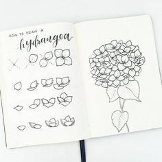 Bullet journal drawing tutorial, how to draw hydrangeas.   @leonornorals4