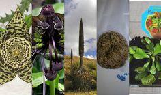 Las plantas más raras, extravagantes, originales...