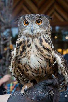 """* * OWL WISDOM: """" People with narrow minds usually have broad tongues."""""""