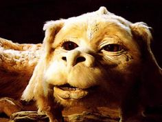 Falcor from The NeverEnding Story (via 23 Sci-Fi Characters You Want on Your Buddy List on EW.com)