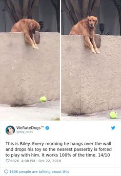 We Rate Dogs 106 Times People Asked To Rate Their Dogs, And Got Hilarious Results Funny Animal Memes, Cute Funny Animals, Cute Baby Animals, Funny Cute, Funny Dogs, Animals And Pets, Lmfao Funny, Animal Quotes, Super Funny