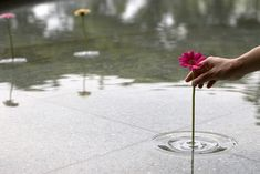 Amazing Illusions of Single Flowers Defying Gravity, plastic thingy that hold flower and floats in water